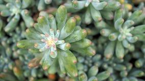 Succulenti o cactus nel giardino botanico del deserto con il fondo dei ciottoli della pietra della sabbia per la decorazione e la fotografie stock libere da diritti
