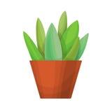succulenti su fondo bianco Fotografie Stock