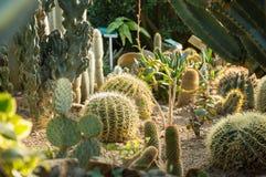 Succulenti su terra sabbiosa Immagini Stock