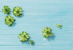 Succulenti su vecchio fondo di legno blu immagine stock