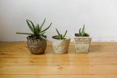 Succulenti in vasi differenti su una parete bianca del fondo e sul pavimento di legno Decorazione domestica immagini stock