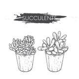 Succulents στα δοχεία αργίλου Κάκτοι που σύρονται στο διάνυσμα Απεικόνιση για την κάρτα ή αφίσα, τυπωμένη ύλη στα ενδύματα Εγκατα Στοκ Εικόνες