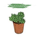 Succulents στα δοχεία αργίλου Κάκτοι που σύρονται στο διάνυσμα Απεικόνιση για την κάρτα ή αφίσα, τυπωμένη ύλη στα ενδύματα Εγκατα Στοκ φωτογραφία με δικαίωμα ελεύθερης χρήσης
