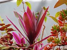 Succulents στη βροχή στοκ φωτογραφία με δικαίωμα ελεύθερης χρήσης
