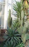 Succulents в парнике стоковые фотографии rf