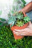 Succulents в сломленной гончарне, стильный садовничать Стоковые Изображения
