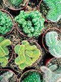Succulents и заводы кактуса в баках Стоковое Изображение RF