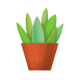 succulents на белой предпосылке Стоковые Фото
