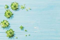 Succulents на старой голубой деревянной предпосылке стоковое изображение