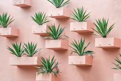 Succulents на стене Стоковые Фотографии RF