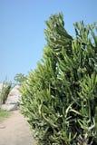 succulents foto de archivo libre de regalías