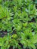 succulents στοκ φωτογραφία