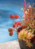 succulents photos stock