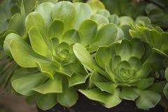 Succulents стоковое изображение rf