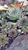 succulents stockbilder