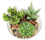 Succulents Photographie stock libre de droits