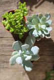 succulents image stock