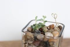 succulents Imágenes de archivo libres de regalías