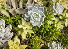 succulents image libre de droits