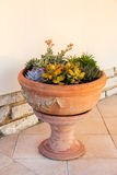 Succulents arrangement  in a big tuscan terracotta pot Royalty Free Stock Image