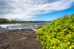 Succulents on the Black Sand Beach, Hawaii Stock Images