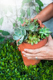 Succulents in broken pottery, Stylish gardening. Cactus Stock Images