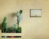 Succulents and cacti Royalty Free Stock Photos