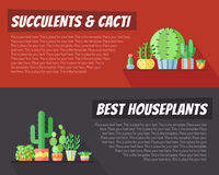 Succulents and cacti flat style multicolored horizontal vector backgrounds with place for your text. Minimalistic design. Royalty Free Stock Images