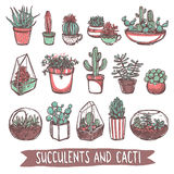 Succulents And Cacti Sketch Collection Royalty Free Stock Photos