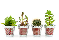 Succulents and cactus Royalty Free Stock Photos