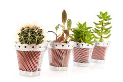 Succulents and cactus Stock Image