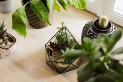 Succulents and cactus in concrete pots. Scandinavian interior. Succulents and cactus in concrete pots. Scandinavian hipster room interior. Modern minimal royalty free stock image