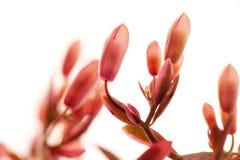 Succulents, cactus, danza de la mariposa, plantas del follaje, flores rosadas, foto de archivo