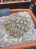 Succulents (cactus) exhibition in a Botanical Garden Royalty Free Stock Photography