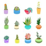 Succulents and cactus in pots of different colors. Cute flat cartoon elements for home design. Vector illustration set of hand dra Stock Photo