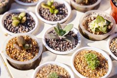 Succulents and cactus for sale at open air street market.  stock image