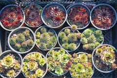 Succulents and cactus for sale at open air street market.  stock images