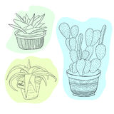 Succulents and cactus set. Illustration with flowers in pots. Vector line art set with cute house interior plants.  stock illustration