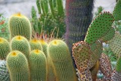 Succulents and cactus with very sharp prickles and thorns Royalty Free Stock Photos