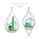 Succulents and cactuses in decorative hanging glass containers. Two floral compositions with cactuses and succulents in decorative glass terrariums Royalty Free Stock Photo