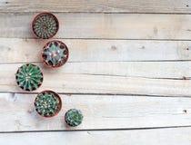 Succulents, cactussen op een lichtgrijze houten achtergrond, Transplantatie, het tuinieren, hobby Stock Afbeelding