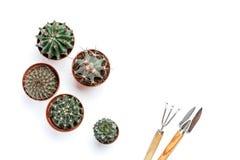 Succulents, cactussen op een witte houten achtergrond, naast leugen een hark, een schouderblad Transplantatie, het tuinieren, hob Royalty-vrije Stock Afbeeldingen