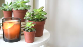 Succulents and candles, cozy white Scandinavian home decoration closeup stock video
