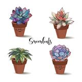 Succulents in clay pots. Set. Graphics with watercolor. Vector stock illustration