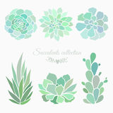 Succulents collection Stock Photography