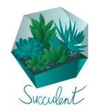 Succulents dans des succulents d'une mini-serre dans des pots, d'isolement sur le fond blanc illustration stock