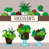 succulents dans des pots Photos stock