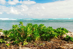Succulents de la playa y ondas de la aguamarina fotos de archivo