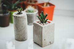 Succulents in den konkreten und Plastikhaltern zu Hause nahe dem Fenster Perfektes Fensterbrett mit Kaktus Eco freundlich und org stockfotografie