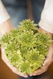 Succulents in der Hand Stockfotografie